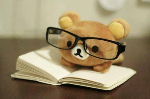 Bear studying